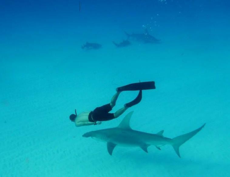 Diego_Cardeñosa_tiburones2