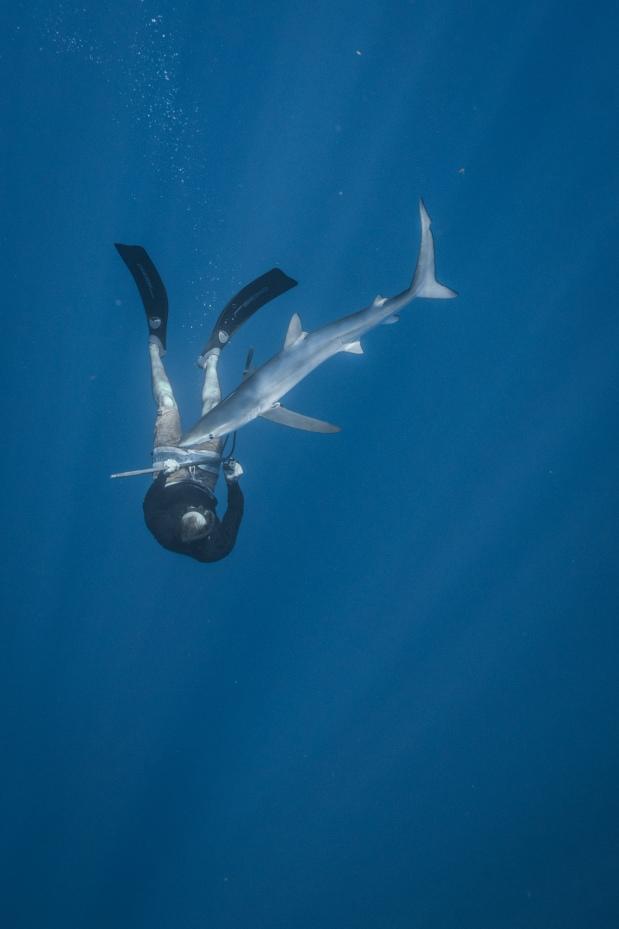 Diego_cardeñosa_tiburones3