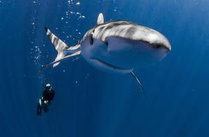 Diego_Cardeñosa_tiburones_embarca