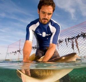 DiegoCardeñosa_sharks